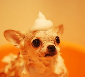 Pet Grooming Services in Jakarta