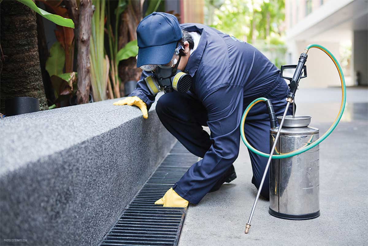Residential Pest Control – Importance and Requirement