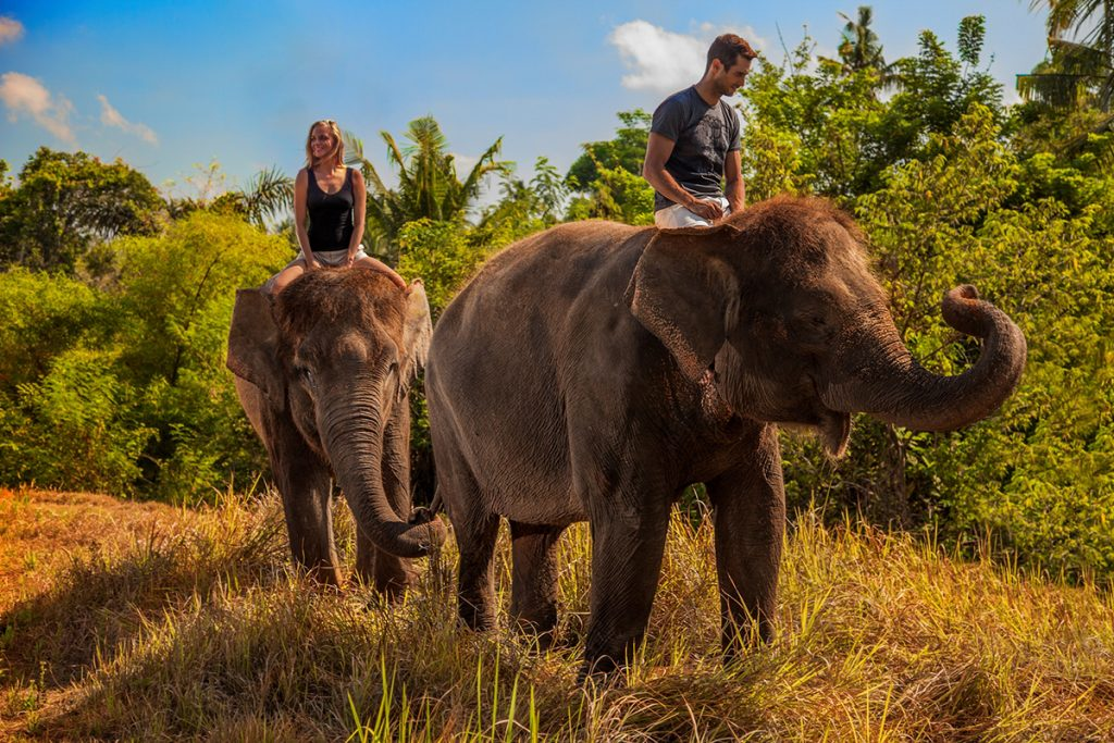 Up and Close with Animals in Bali
