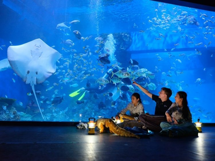 Jakarta Aquarium Recreational And Educational Centre In